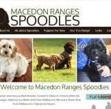Logo and Blog Design – Macedon Ranges Spoodles